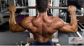 عضلات زیر بغل latissimus dorsi