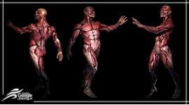 عملکرد سیستم عضلانی