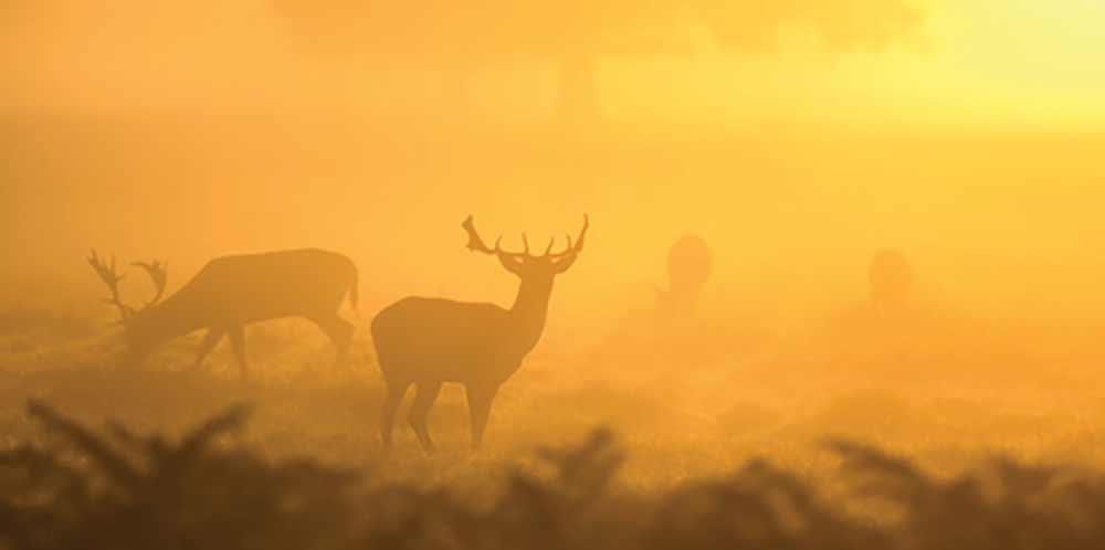 اثرات آلودگی هوا بر حیوانات و محیط زیست