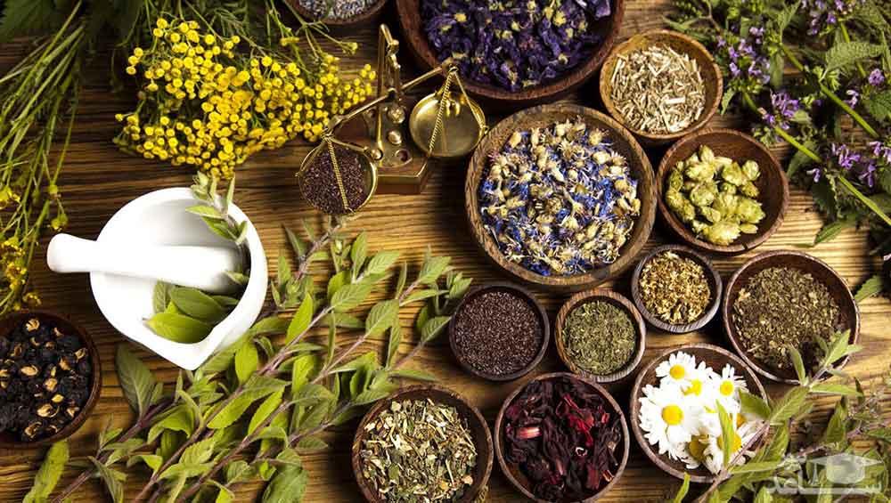 بهترین گیاهان برای تقویت حافظه
